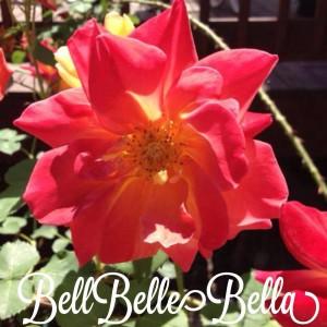 BellBelleBella logo