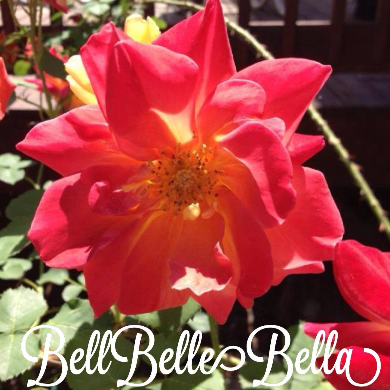 BellBelleBella: My Blogger to WordPress Transfer Experience graphic